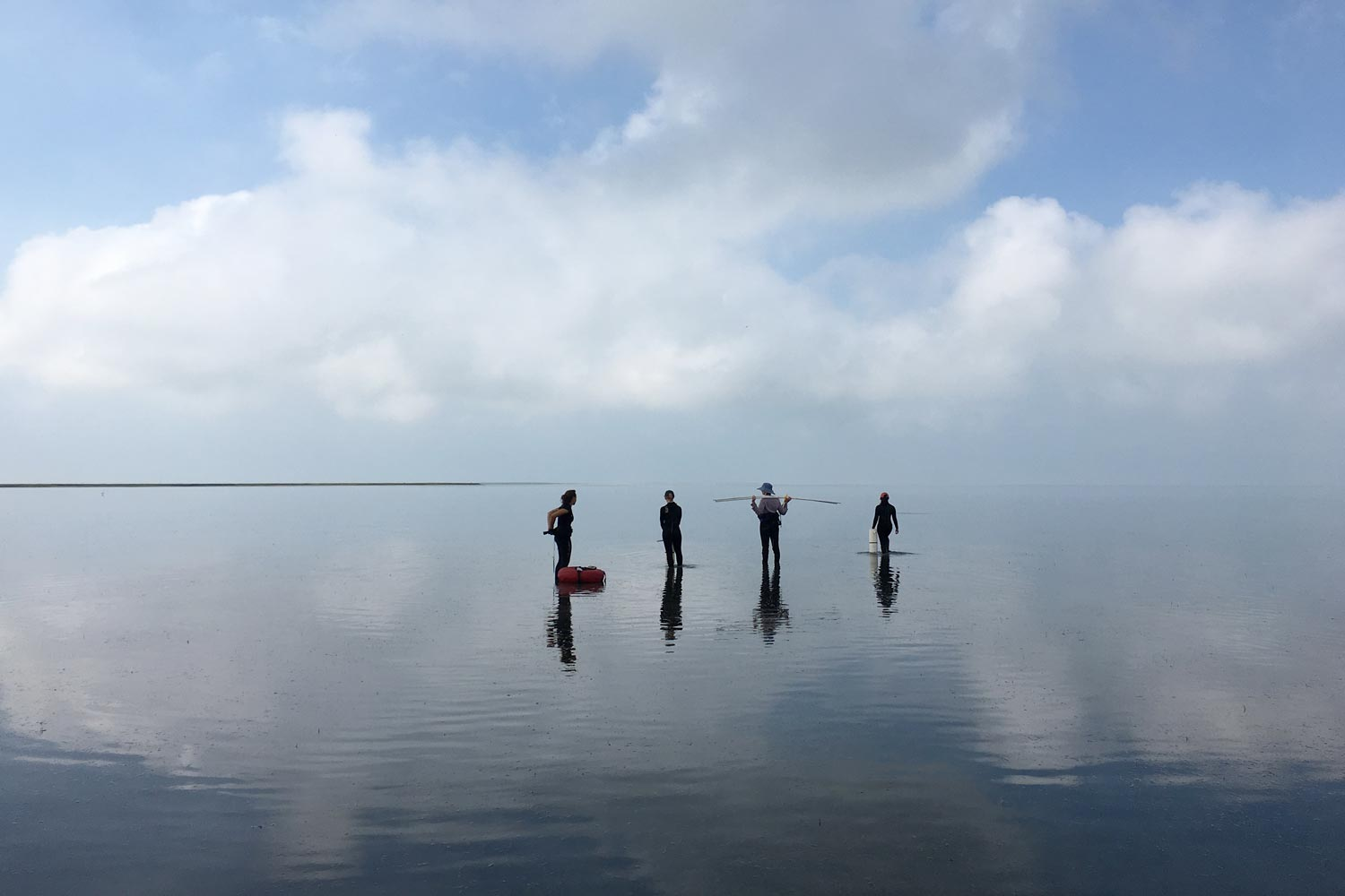 Graduate students and interns survey a seagrass site at the Virginia Coast Reserve.