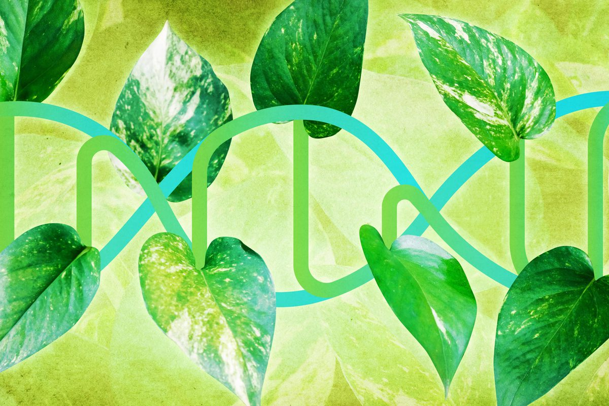 From Plants, UVA Extracts a Better Way to Determine What Our Genes Do