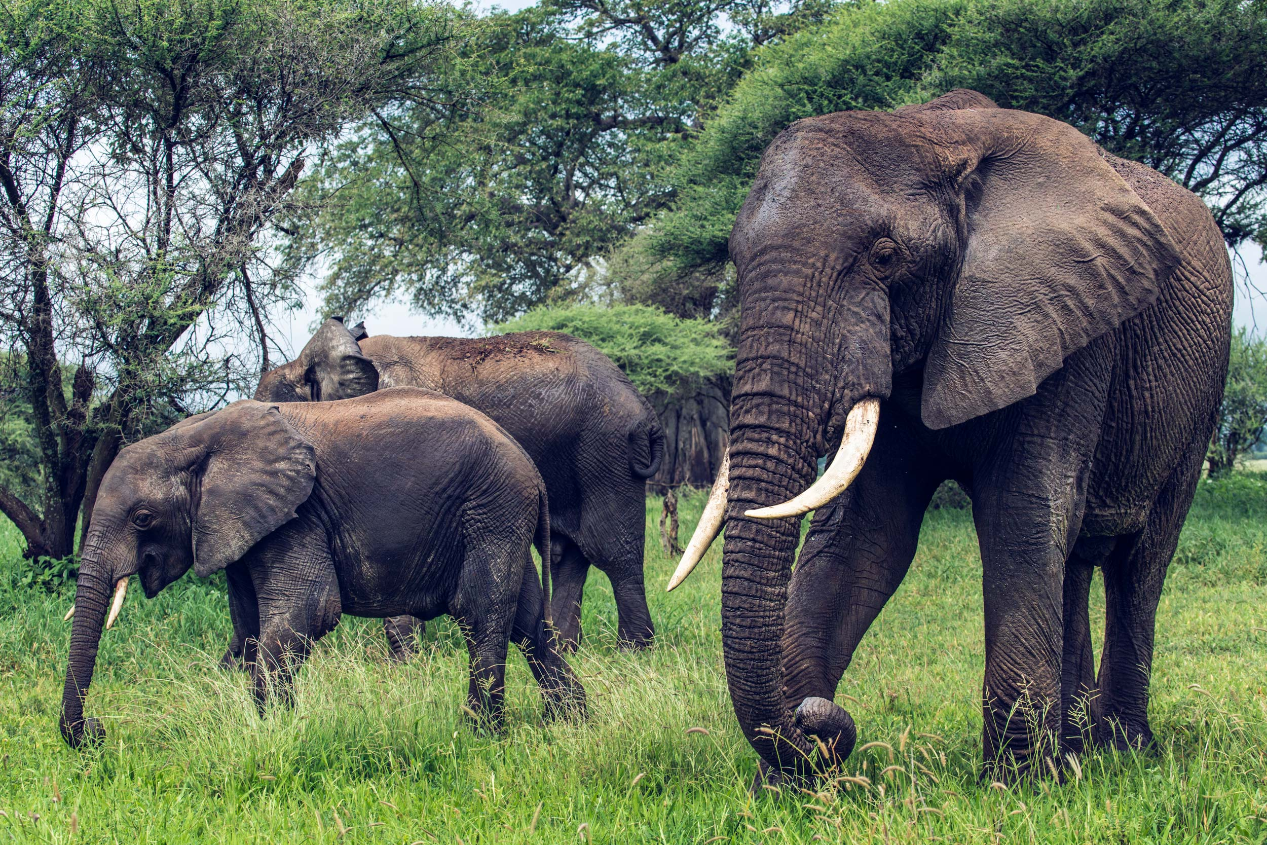 UVA Grad to Use Luce Scholarship to Save African, Asian Wildlife