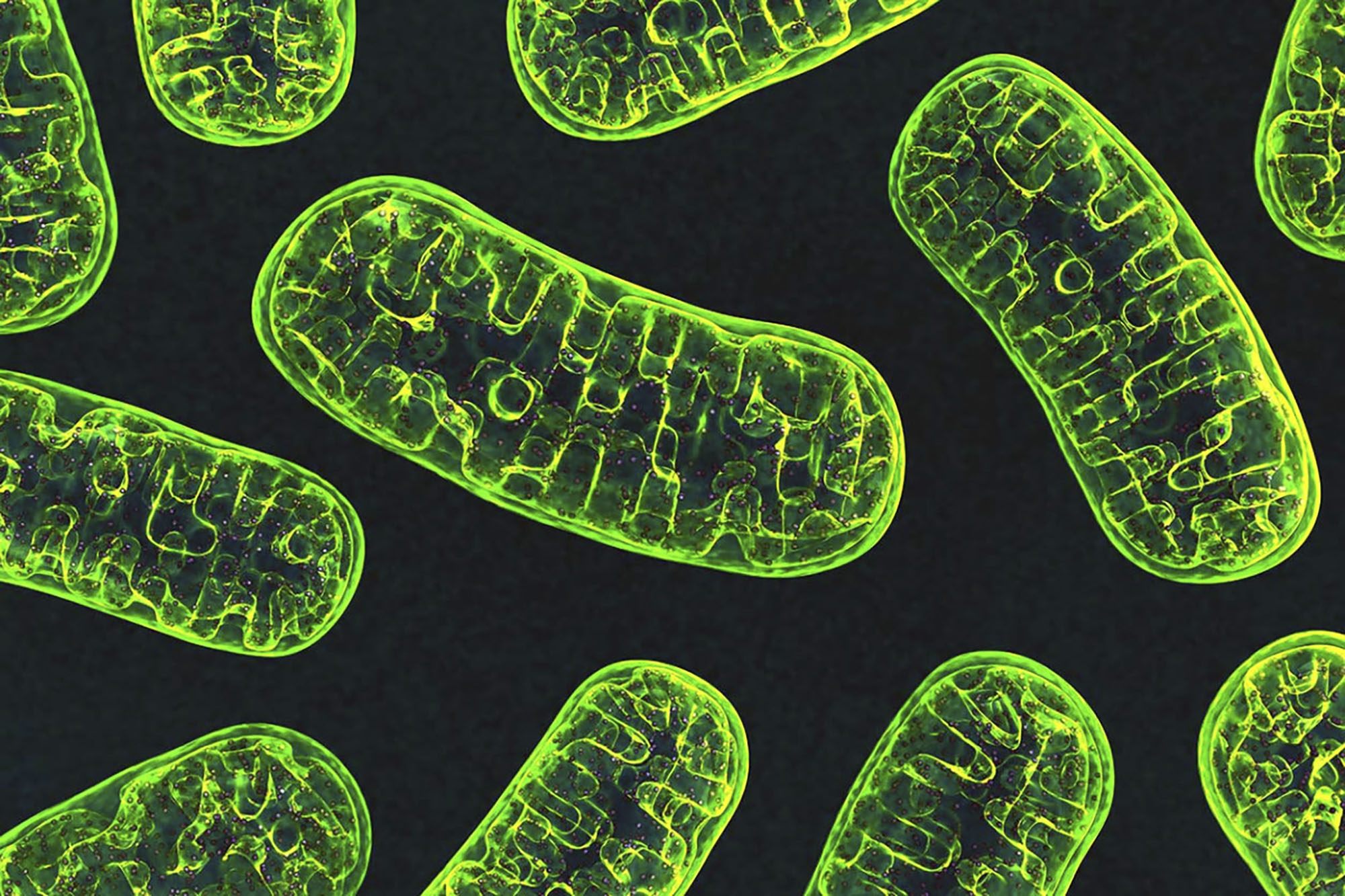 Discovery About Cells' 'Batteries' Boosts Battle Against Many Diseases