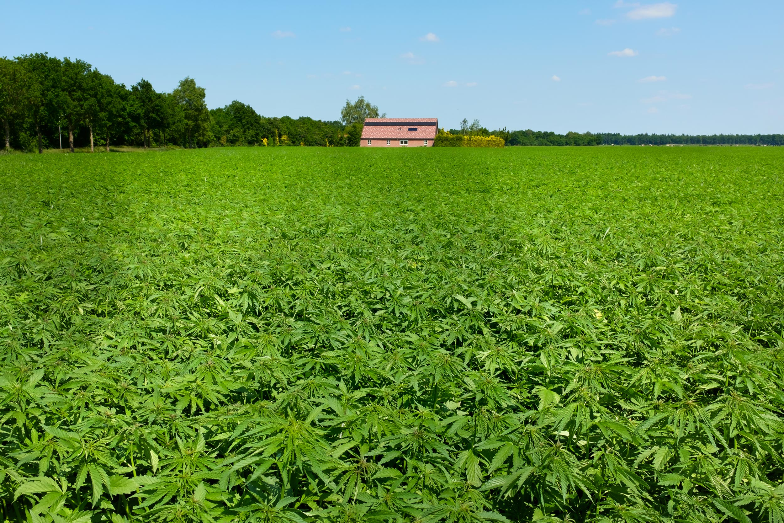 Can Hemp Bring Back the Economy in Appalachian Virginia?