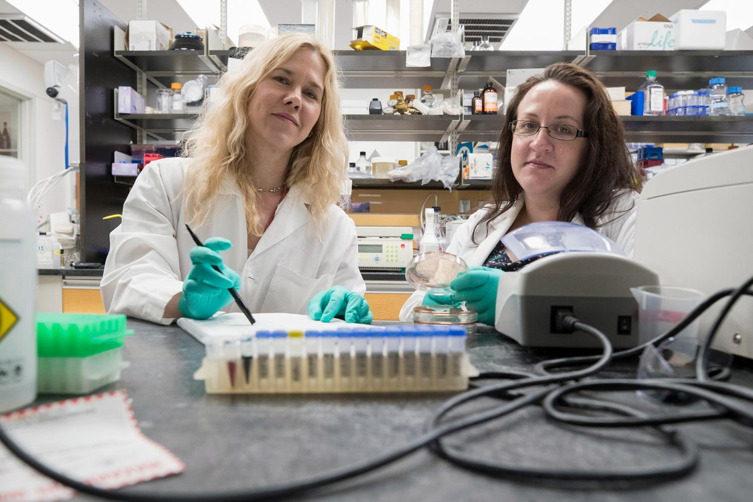 Researchers Melissa Kendall, left, and Beth Melson found that E. coli bacteria use oxygen levels to sense where they are in the digestive system – and attach themselves where they can do the most harm.