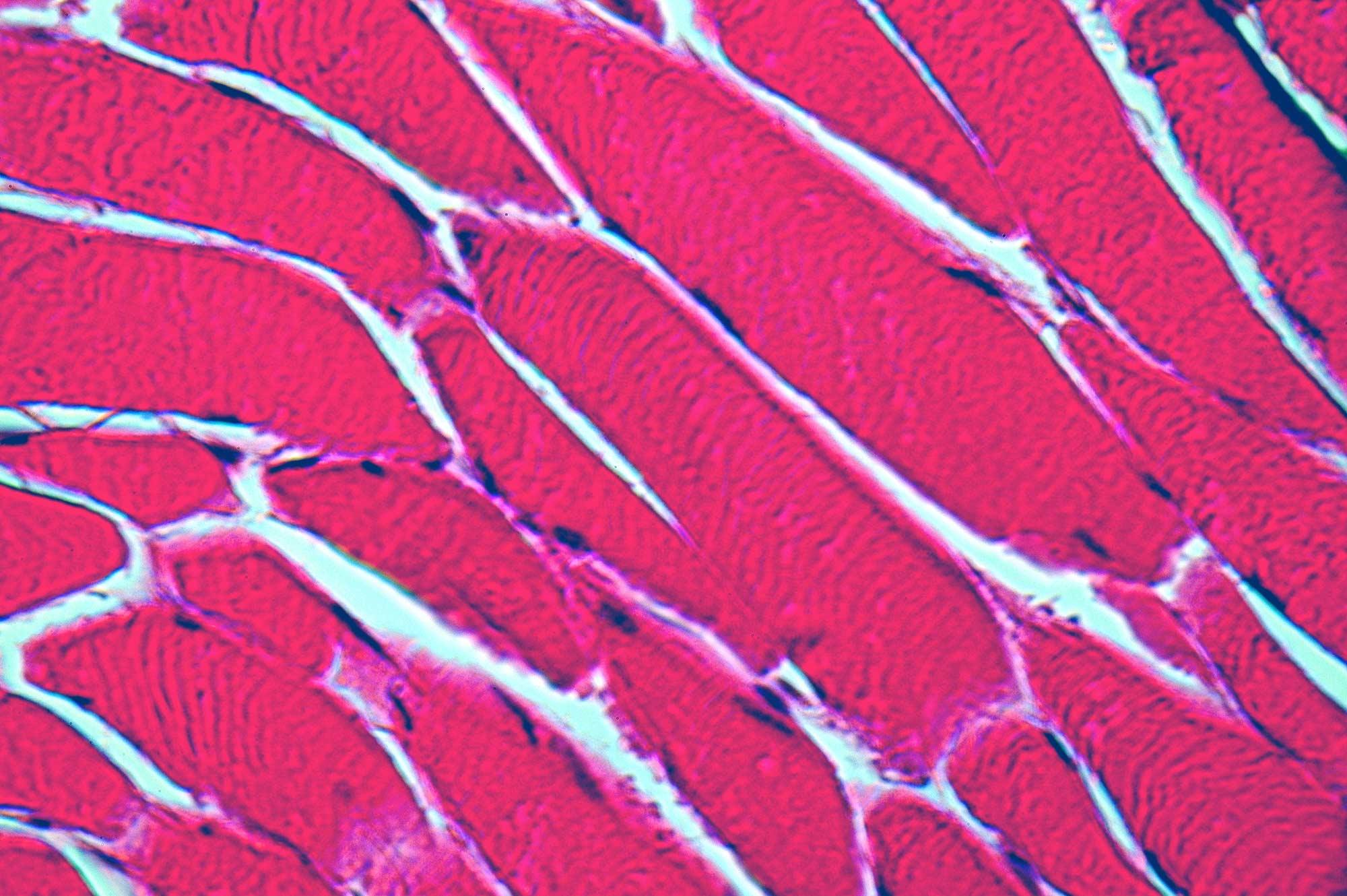uva  partners   bold goal manufacturing human tissue uva today