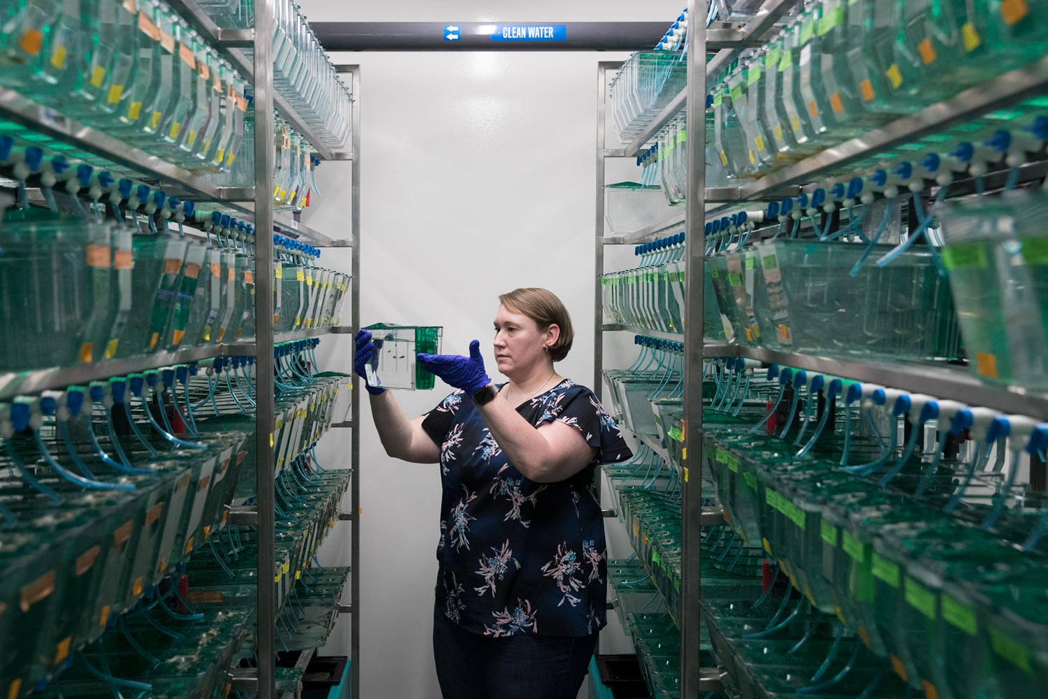 Developmental biologist Sarah Kucenas is gaining insights to the nervous systems by using zebrafish as a study model.