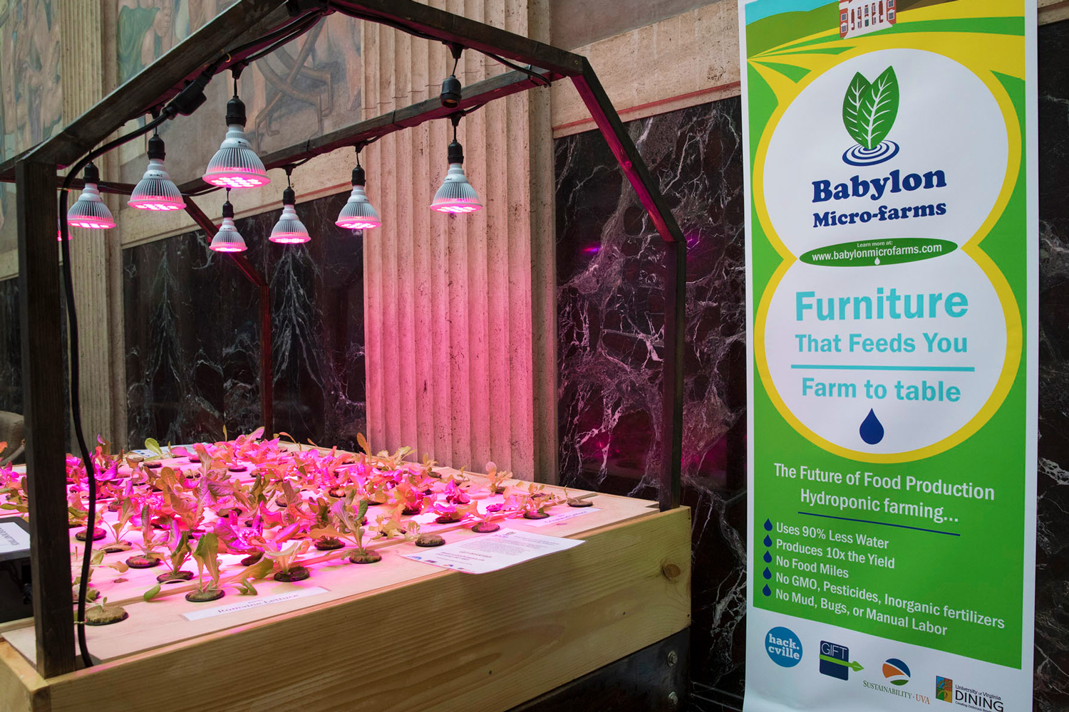 Plants grown in hydroponics systems, such as those used by Babylon Micro-Farms, are free of GMOs and pesticides. (Photo by Dan Addison, University Communications)