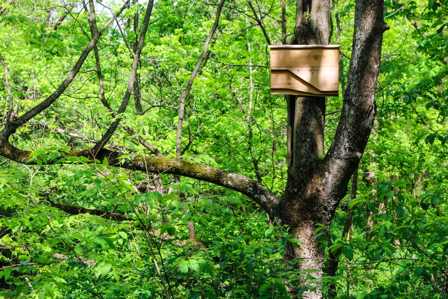 The bat houses can be mounted in trees or on the sides of homes and buildings, providing a safe home for bats in the area.