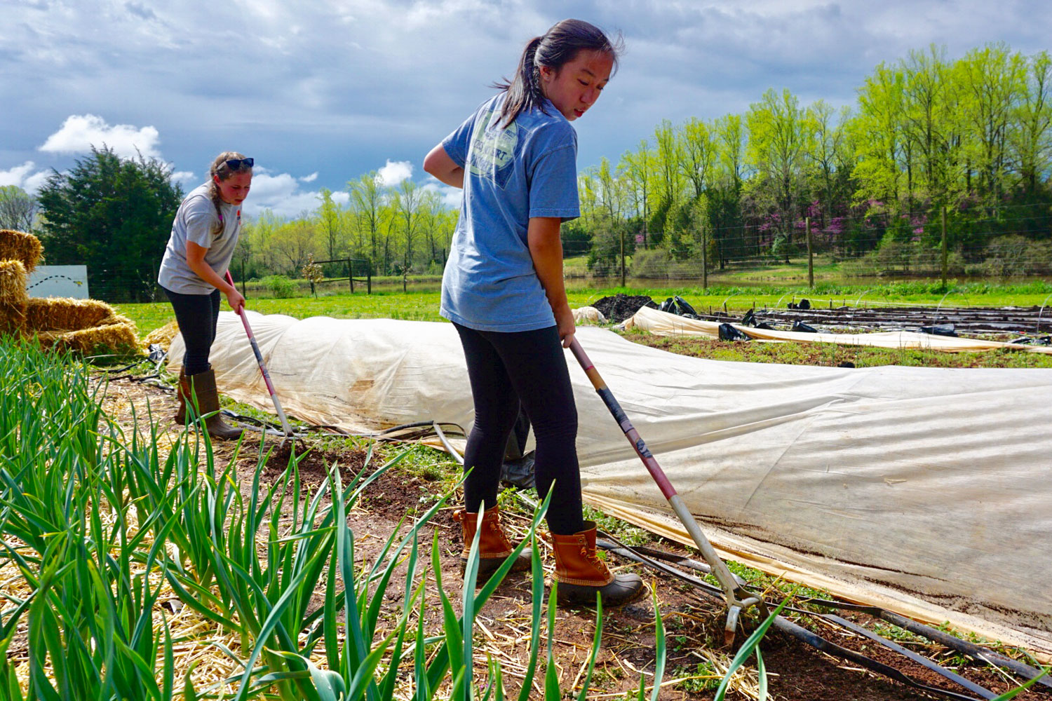 Mikaela Ruiz-Ramon, a student leader with the Morven Kitchen Garden program, and Tiffany Pham prep a bed for planting scallions.