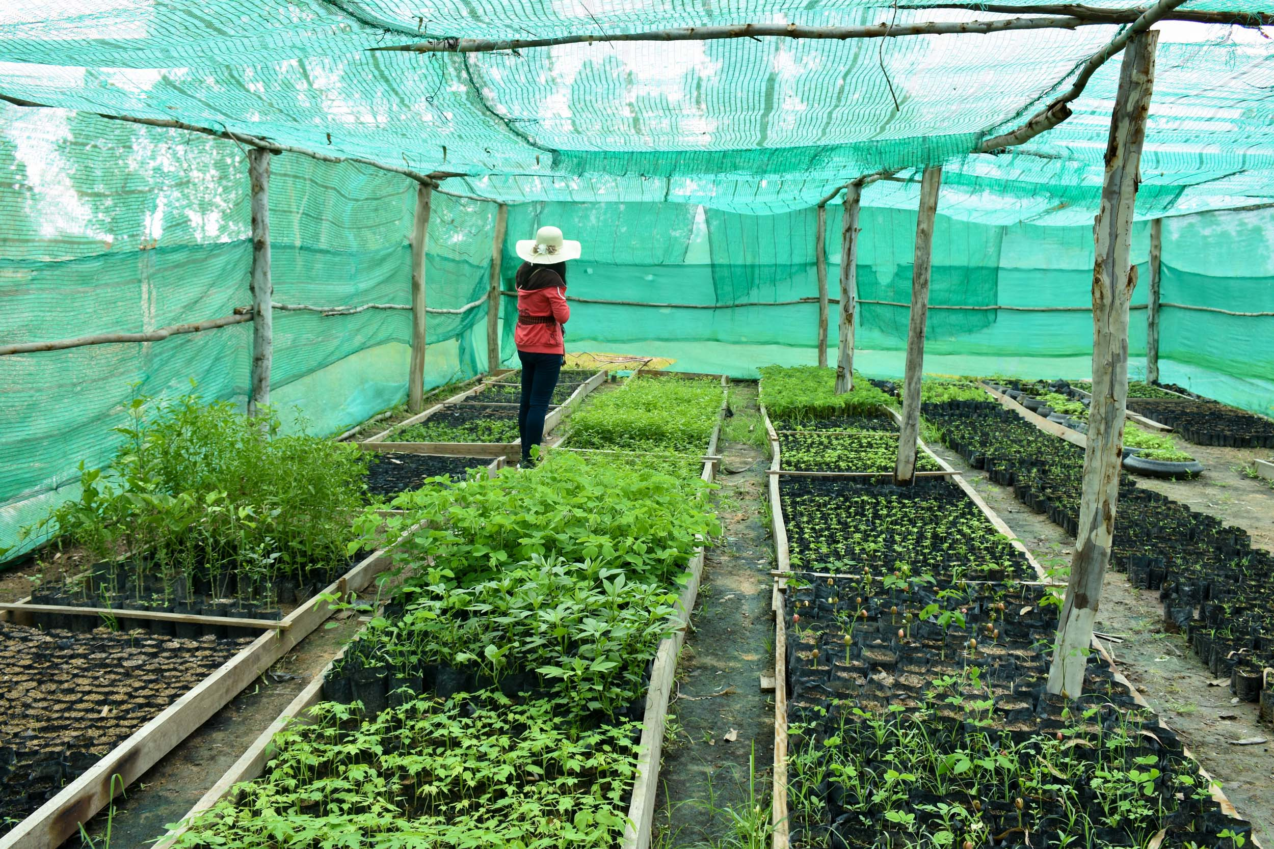 Carter's CEDAC adviser Angkeasath Neat inspecting a tree seedling nursery on a farm outside of Phnom Penh.