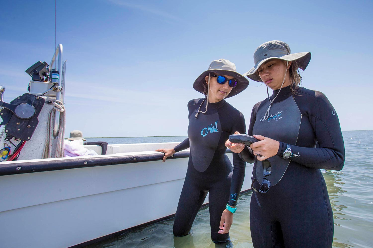 UVA researchers are working on seagrass restoration and studies in the seaside bays of Virginia's Eastern Shore.
