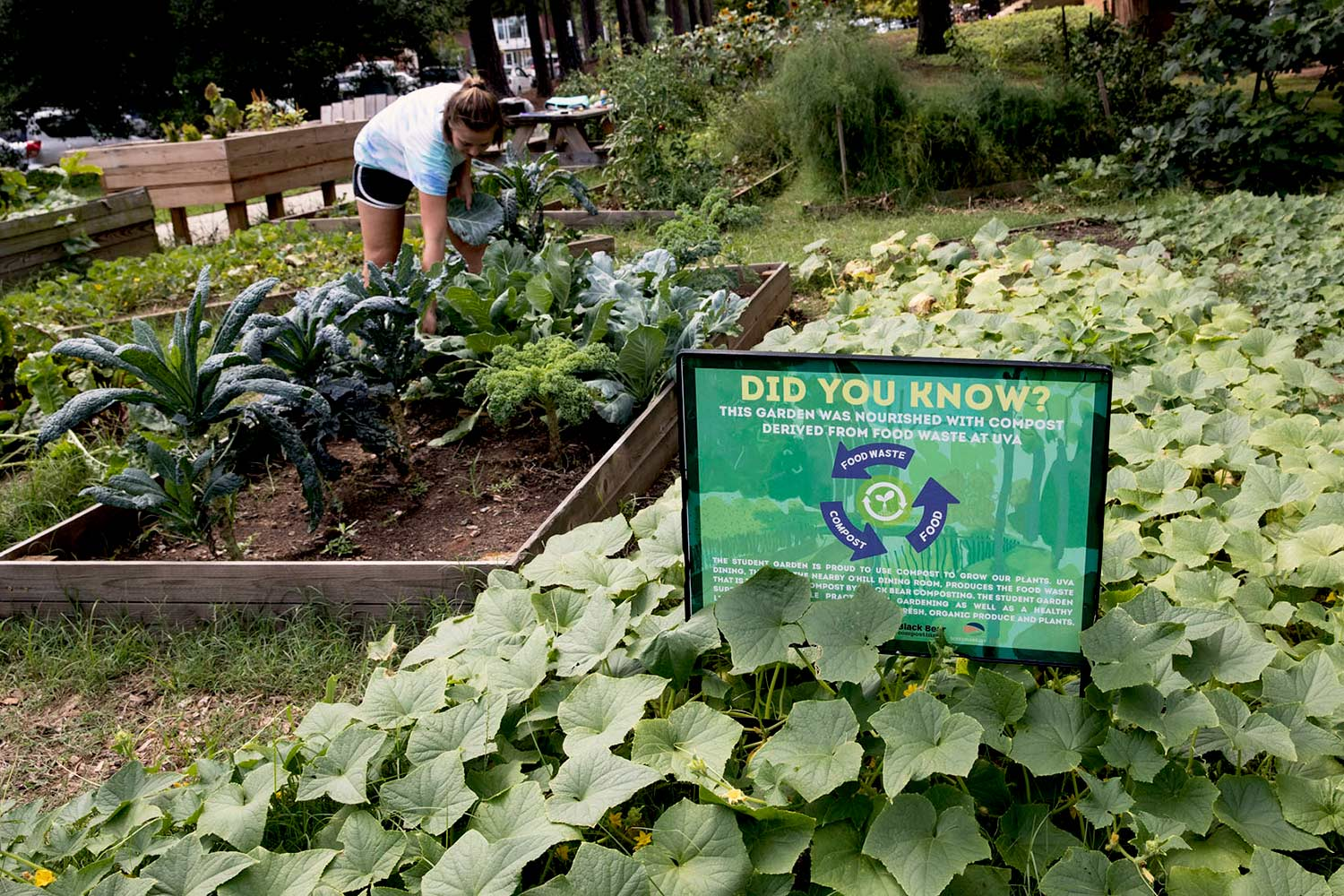 The UVA Community Garden, a student initiative, serves as a continuous example of organic gardening and sustainability.