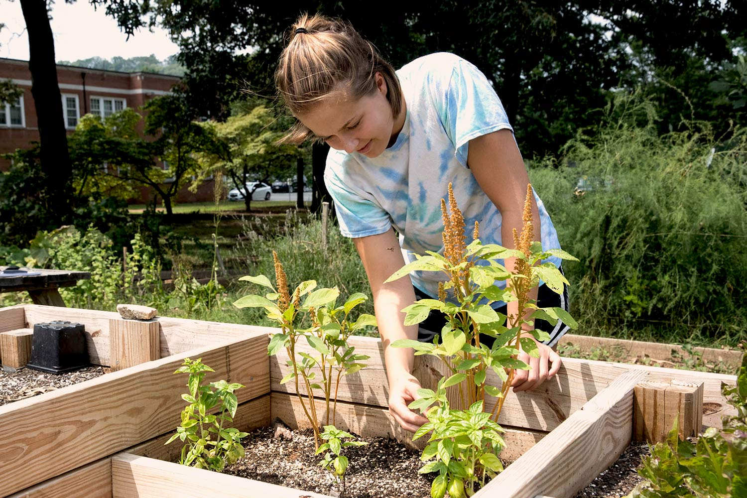 : A wheelchair-accessible garden bed, a project completed by students in the UVA School of Architecture's Freedom By Design community service program, is one of many service projects that have contributed to the functioning of the Community Garden.
