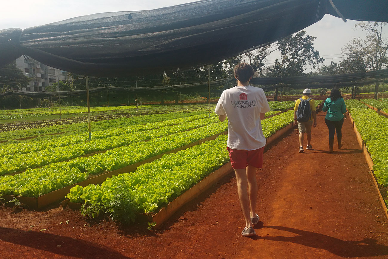 Students tour an organic farm, Organoponico Vivero Alamar, located just outside of Havana. (Photo courtesy of Nia Logan)