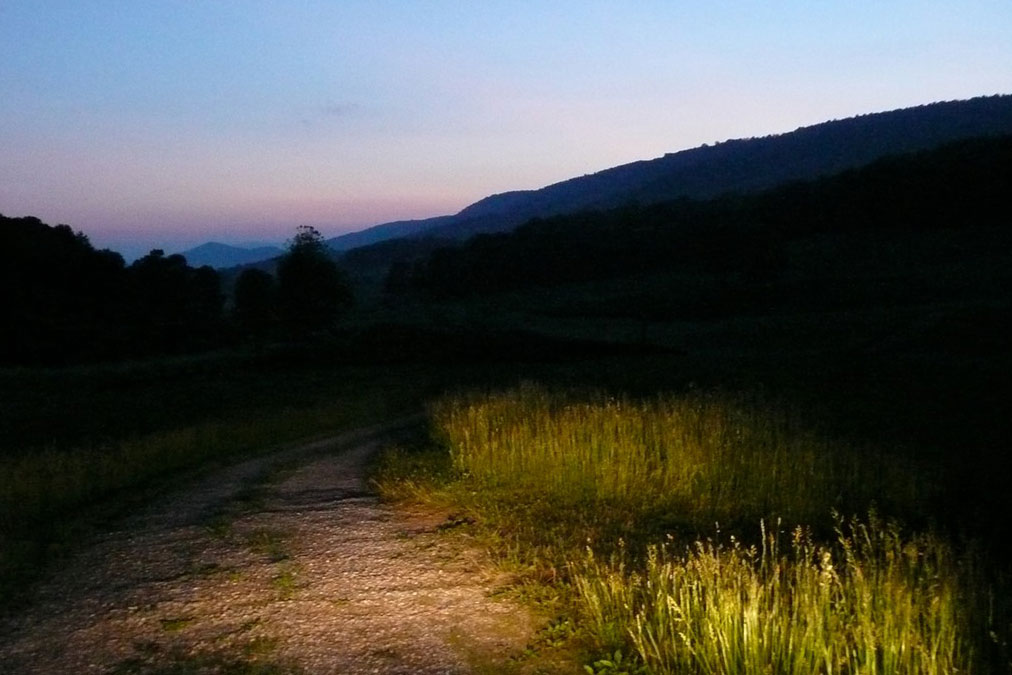 Researchers travel the back roads at dawn and dusk looking for flowers to sample.
