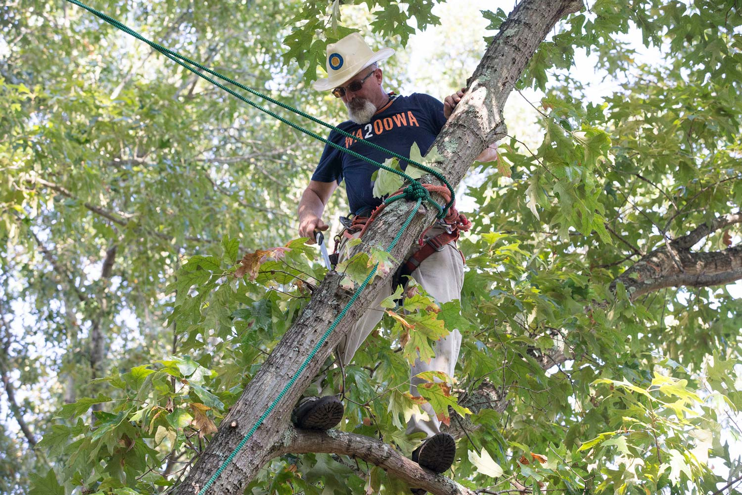 University Arborist Jerry Brown, wearing his trademark Stetson-style hardhat, trims a tree at Camp Holiday Trails as part of the annual Day of Caring.
