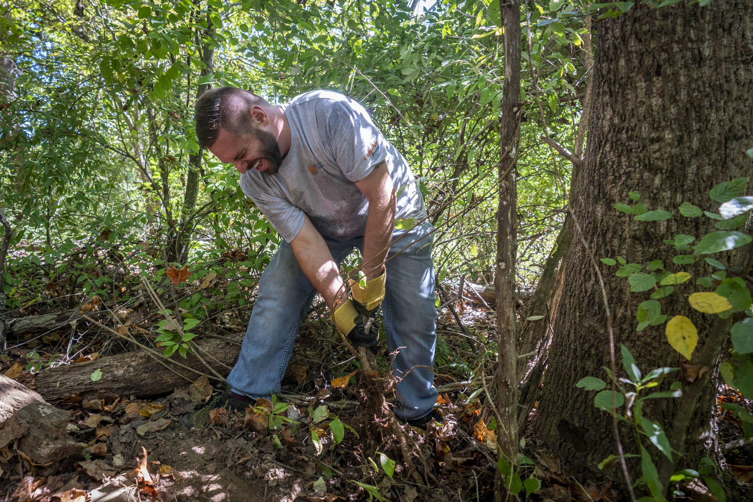 UVA employees, including video producer Vinny Varsalona (here removing invasive vines at the Ivy Creek Natural Area) worked at several locations. (Photo by Sanjay Suchak, University Communications)