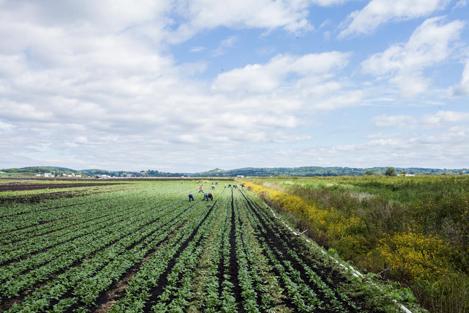 Dig Inn leases farmland in Chester, N.Y. to grow some of its ingredients.