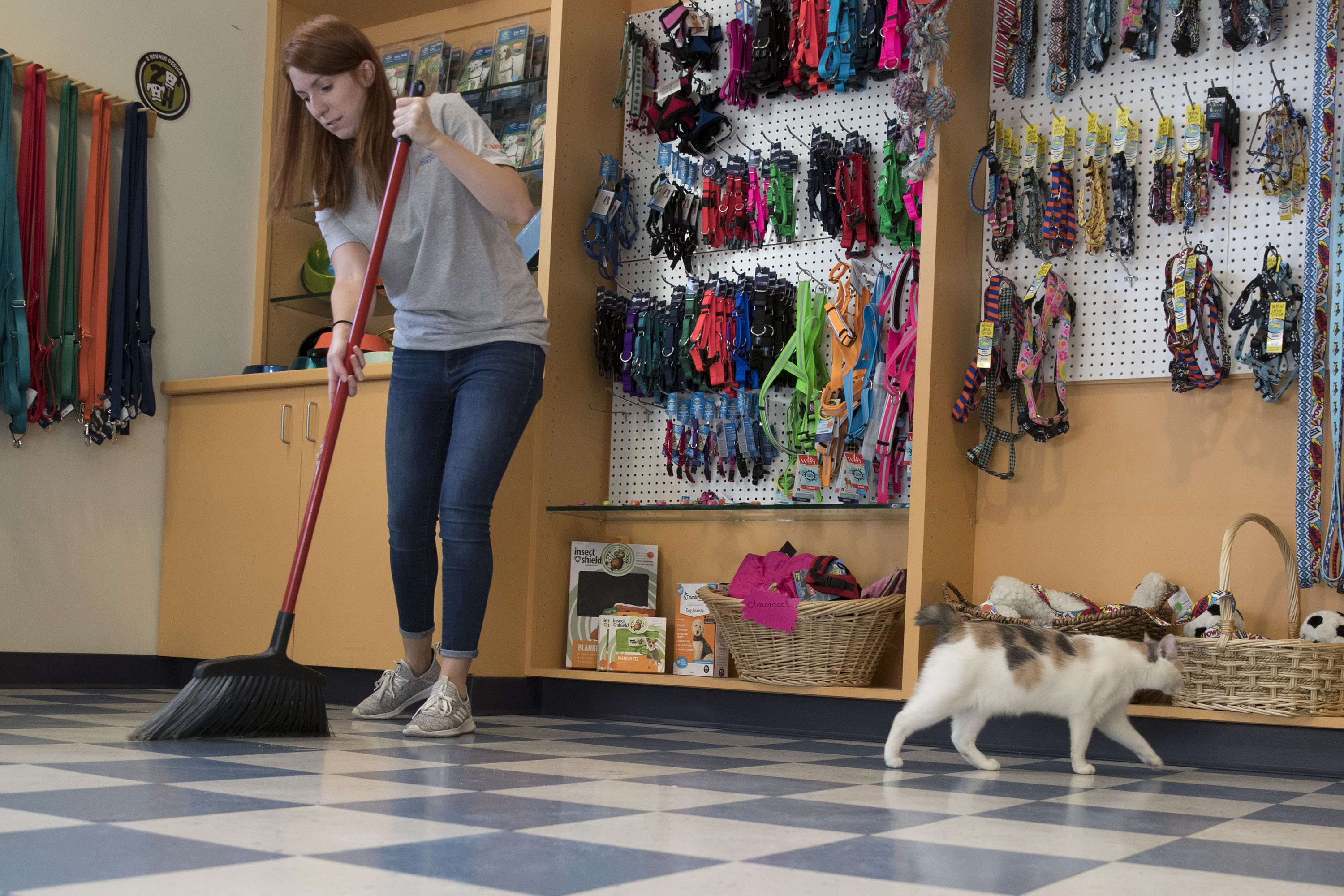Mary Andrews, program operations and special projects manager at the Darden School of Business, helped out at the Charlottesville-Albemarle SPCA, and the cats seemed pleased. (Photos by Dan Addison, University Communications)