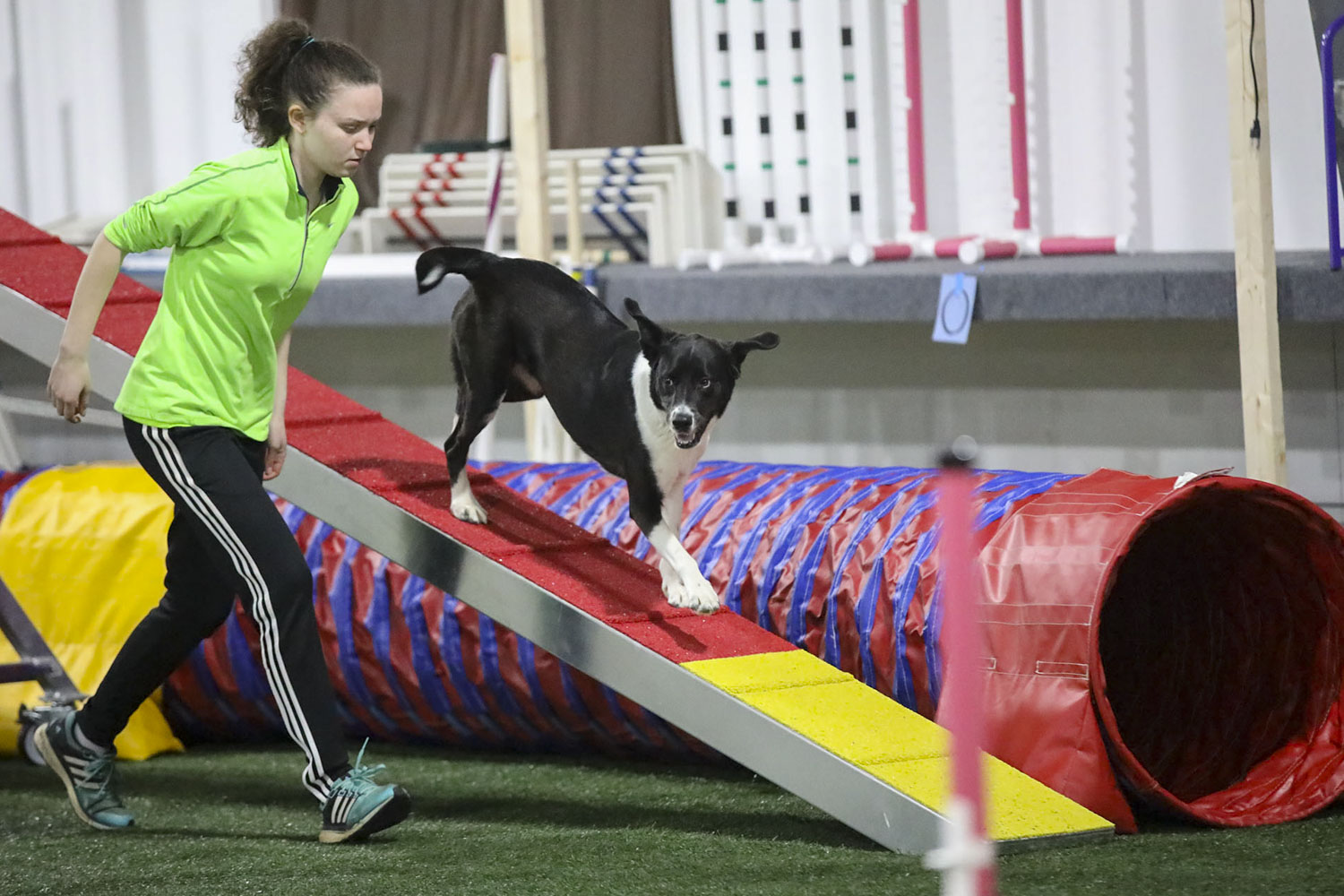 Riley quickly took to agility training and has been competing alongside his trainer, first-year student Kira Baugh, ever since.