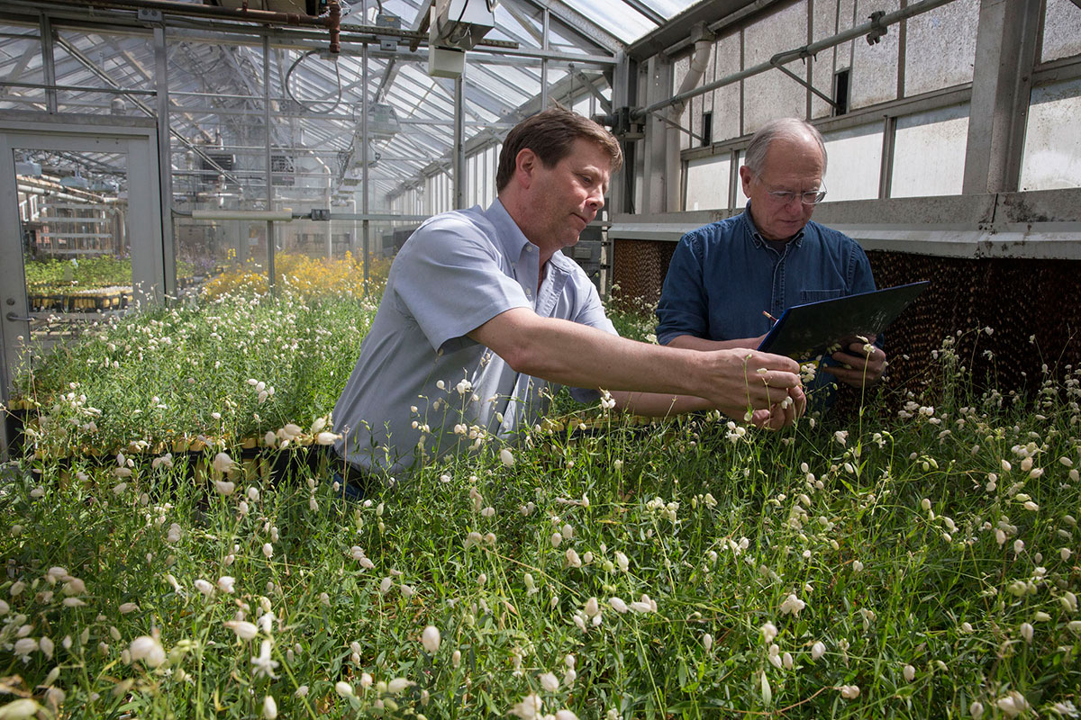 Professors Doug Taylor, left, and Janis Antonovics have together been studying white campion and anther smut for 28 years. (Photo by Dan Addison, University Communications.)