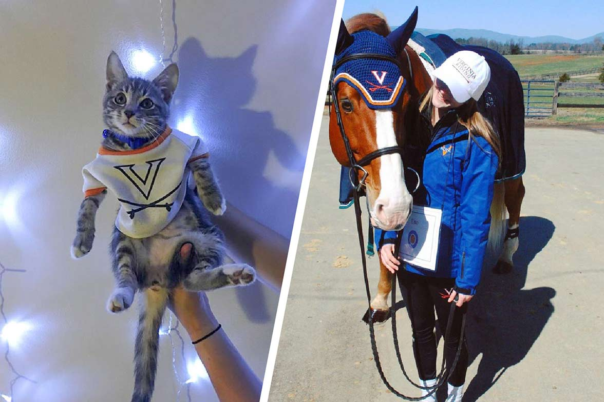 A star-struck kitten, left, took third place, and Uno the horse took second. (Contributed photos)
