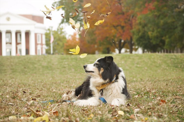 Dogs and fall make a great combination, according to photo contestant Julia Stewart.