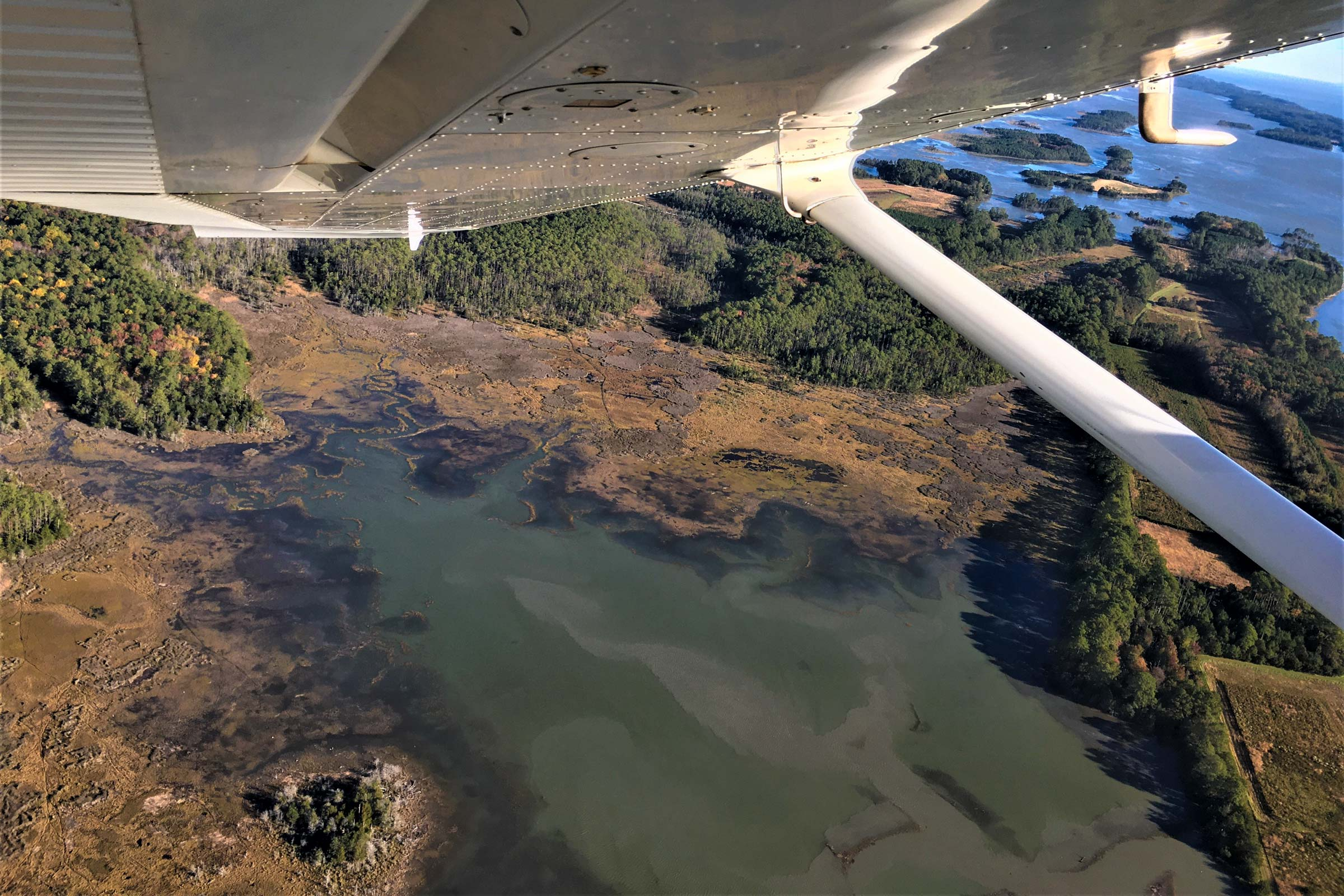 Graying trees and thinning forests encircle a site where UVA researchers have documented changes in marsh elevation for more than 20 years. The formation of these ghost forests indicates rising sea levels and marsh migration inland.