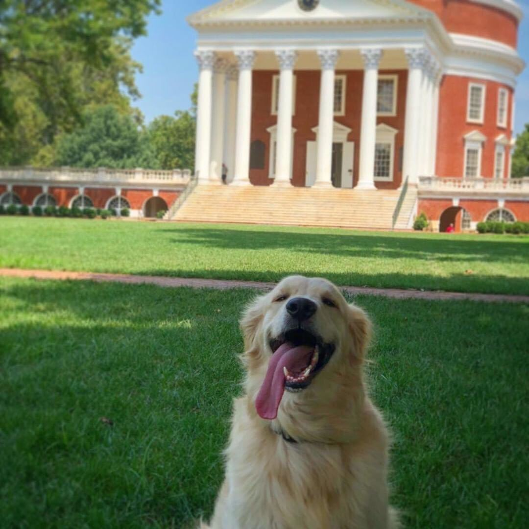 Adorable dogs were a feature of this year's UVA Spring Photo Contest. (Contributed Photo, @gshamiyeh on Instagram)