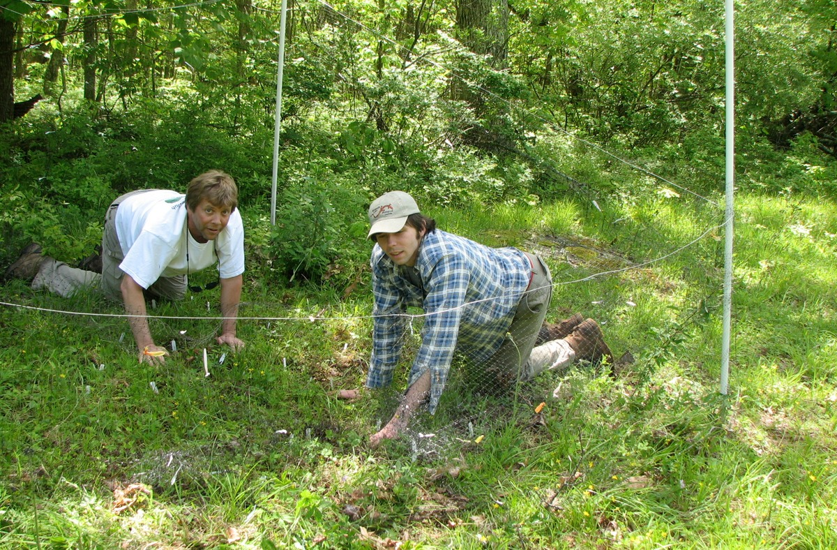 Taylor and former student Peter Fields on hands and knees in a study plot.