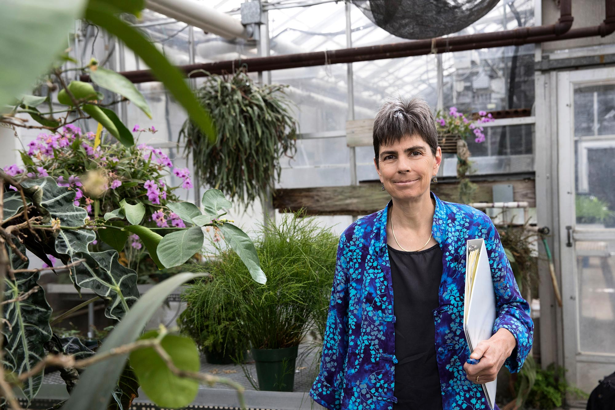 Biology professor, Laura Galloway, who explores evolutionary change in plants, co-authored the study.