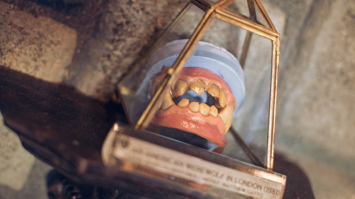 A set of werewolf dentures in a glass display case