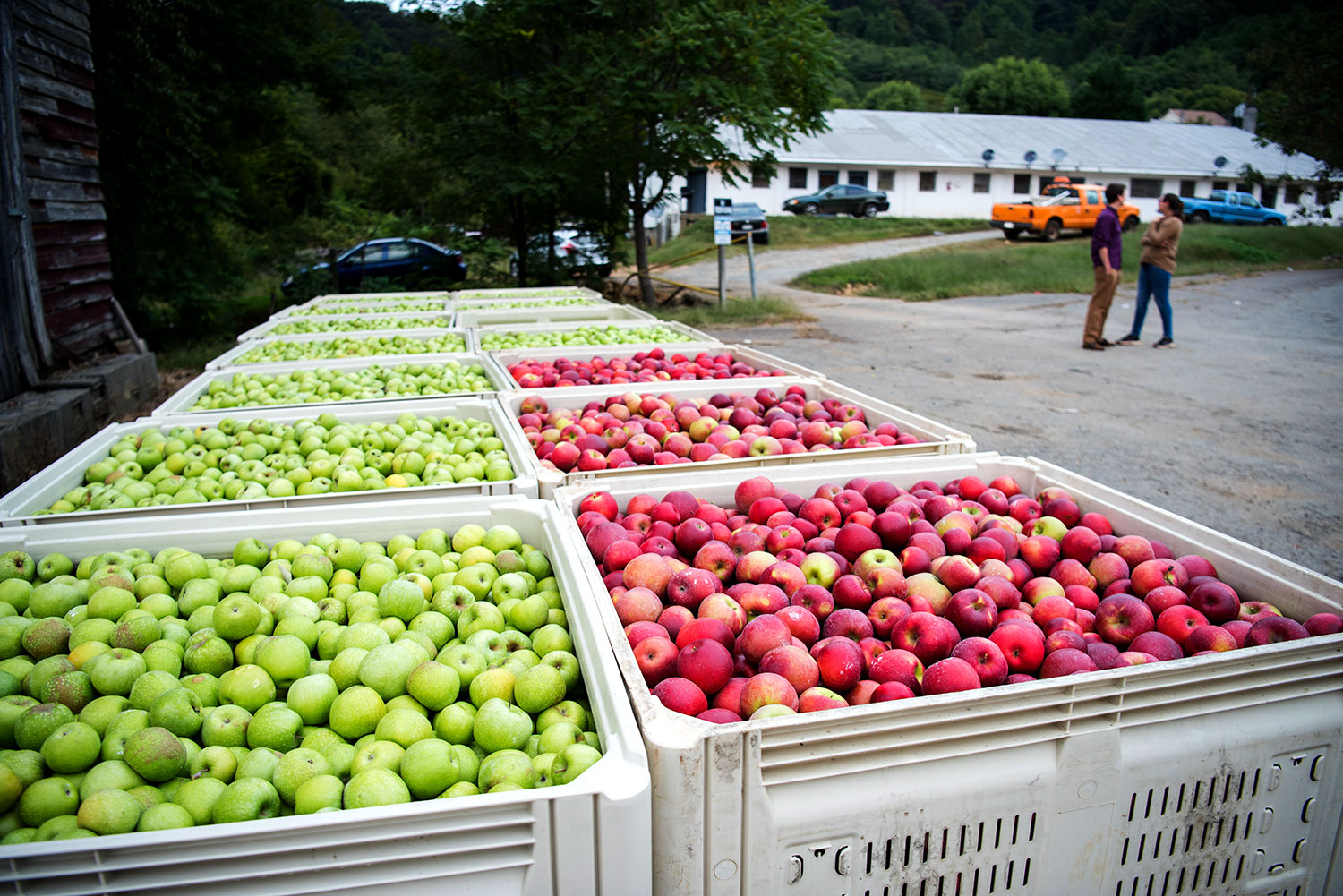 The apple harvest season annually brings scores of seasonal agricultural workers to Central Virginia. (Photo by Jesús Pino)