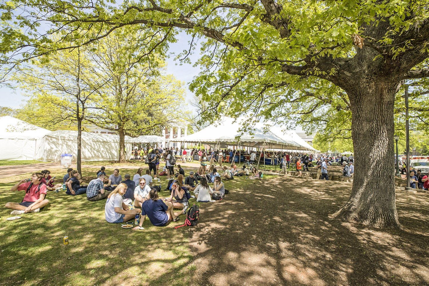 Diners relax under a shade tree at the picnic celebrating University President Teresa A. Sullivan on Wednesday.