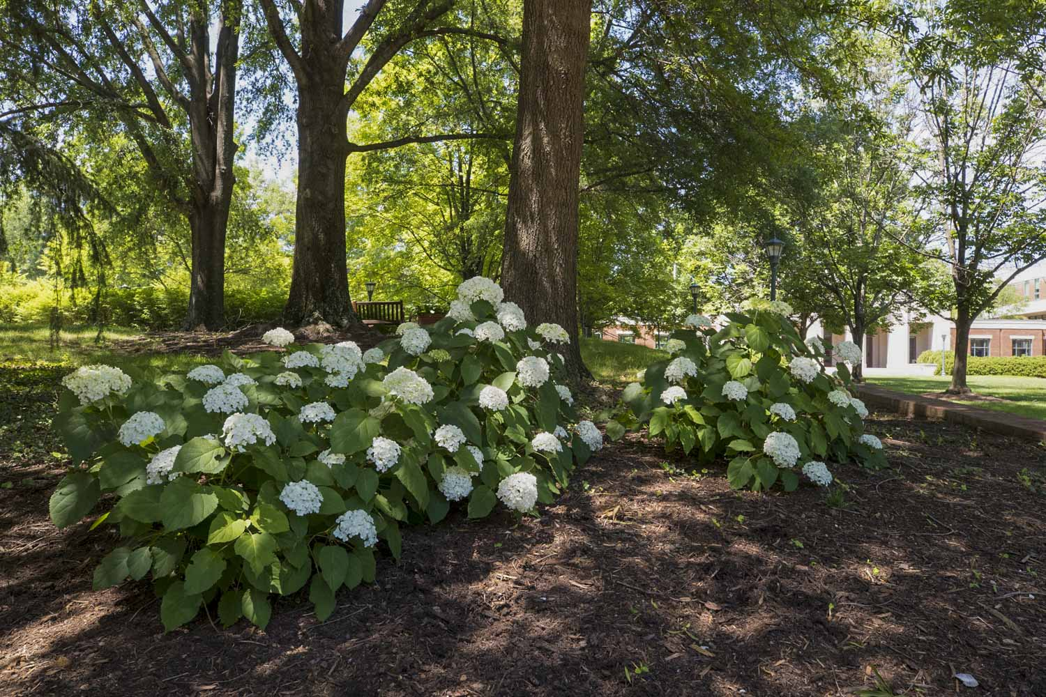 e22062e27716 These 10 Plants Thrive on UVA's Grounds. They Could Thrive in Your ...