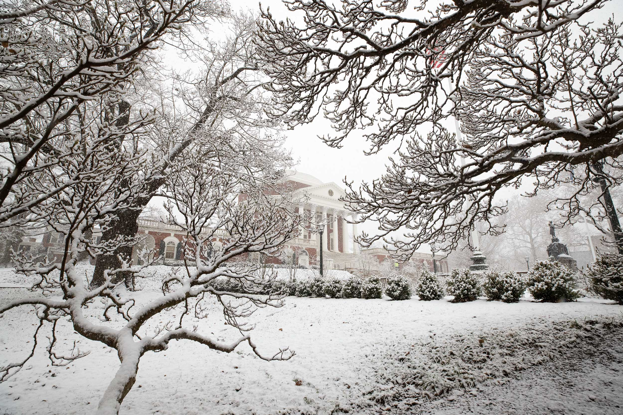 Flakes coated the twisting limbs of this tree near the Rotunda.