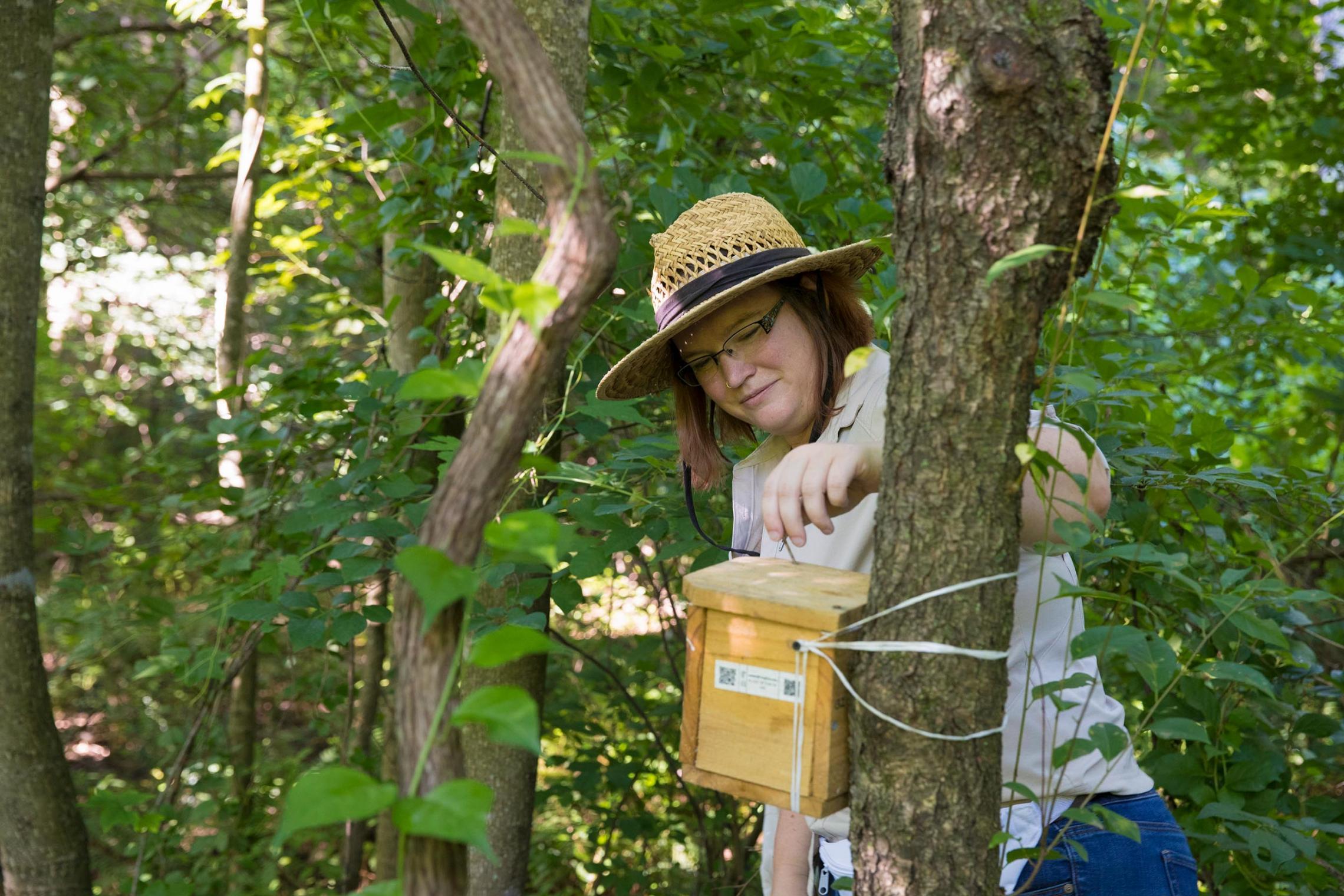 Environmental sciences Ph.D. candidate Amber Slatosky checks a bumblebee nesting box in McIntire Botanical Garden. (Photo by Dan Addison, University Communications)