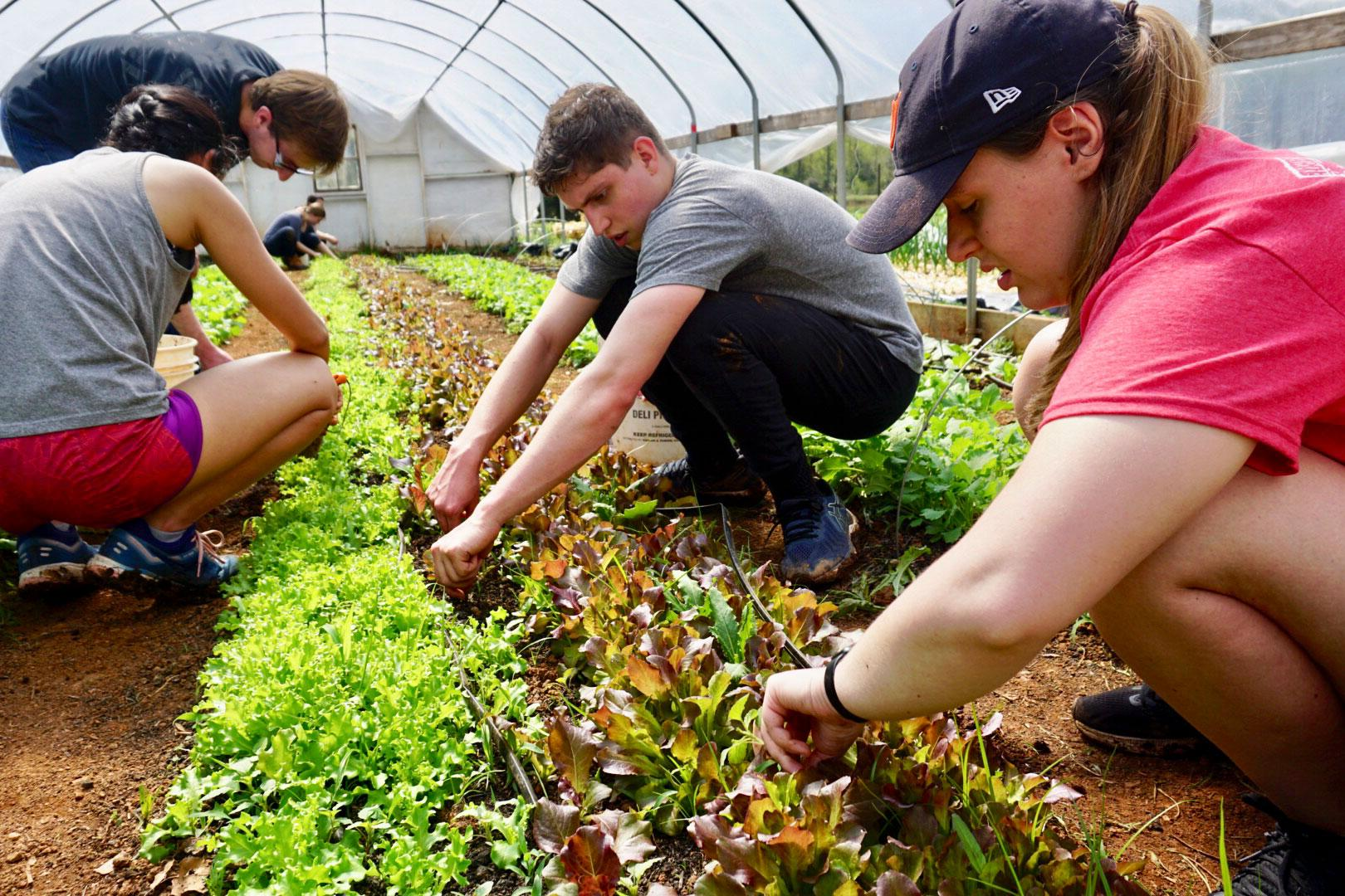 Students volunteered at Morven Farm, doing a variety of tasks in the educational garden that currently serves as a local food systems laboratory for students and faculty.