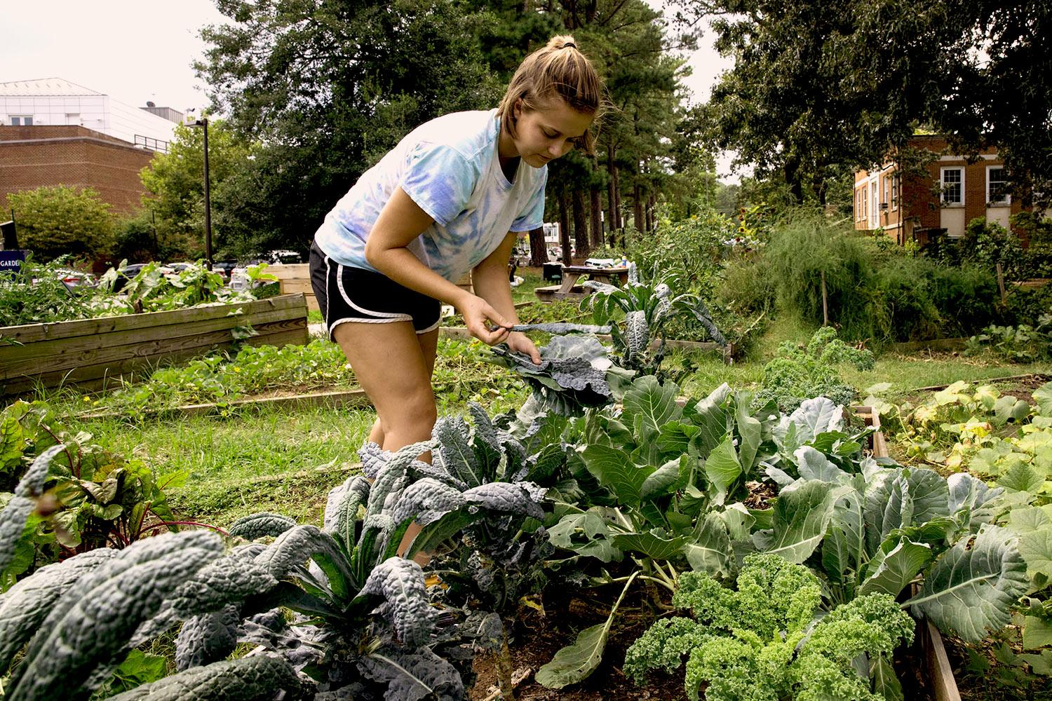 Rising third-year Elise Watt spent her summer managing a garden through a Charlottesville Sustainable Agriculture Internship. (Photos by Dan Addison / University Communications)