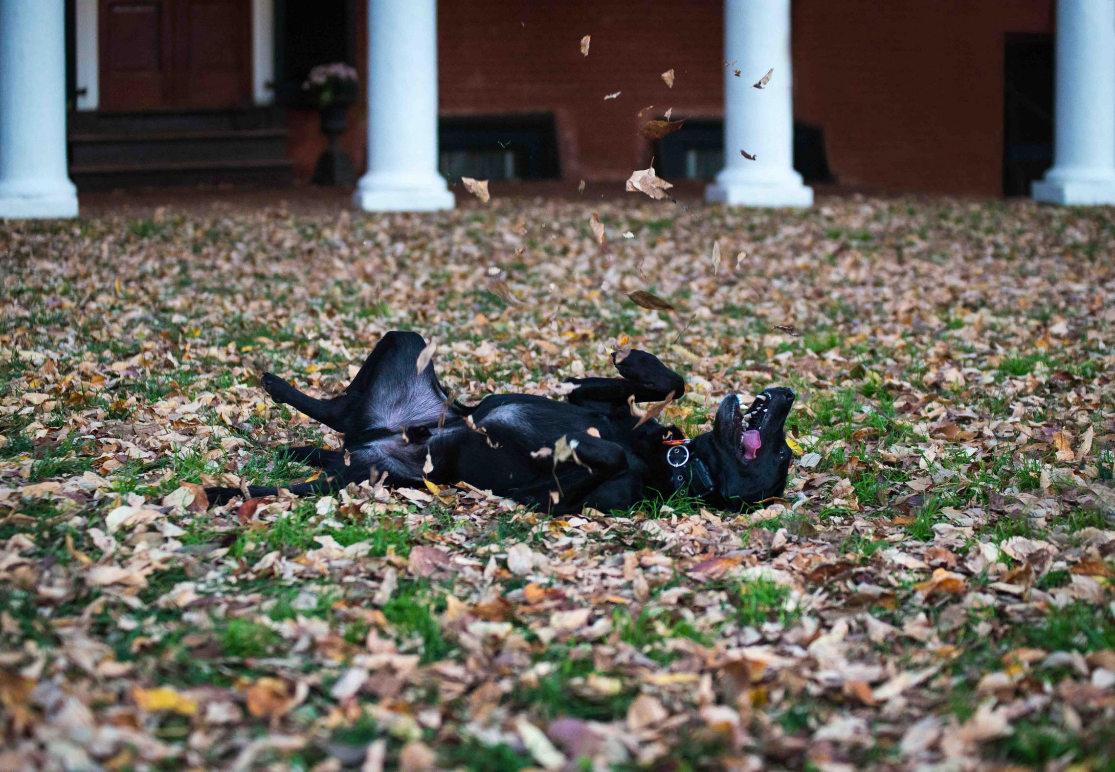 """""""No one loves fall fun more than this guy,"""" said Zachary Sloman, first-place winner in this year's contest."""