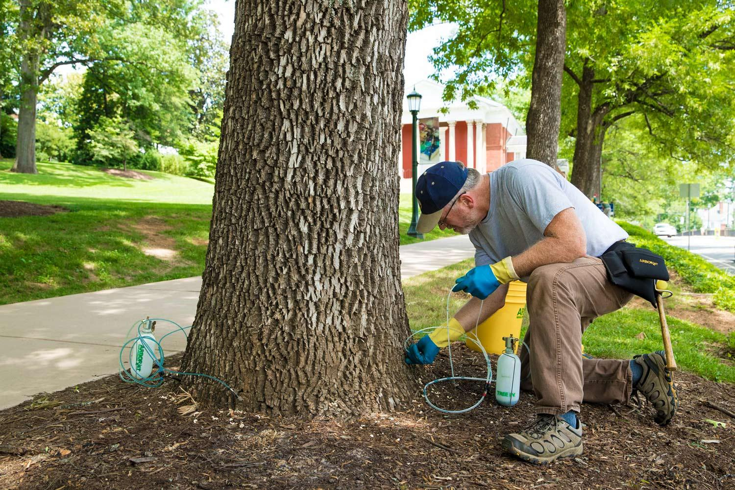 Sten Cempe, from Big O Tree and Lawn Service in Stuart's Draft, injects a chemical into the base of an ash tree on Rugby Road to protect it from the emerald ash borer. (Photo by Dan Addison, University Communications)