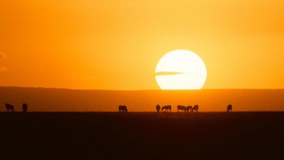 africa_heat_header_3-2.jpg
