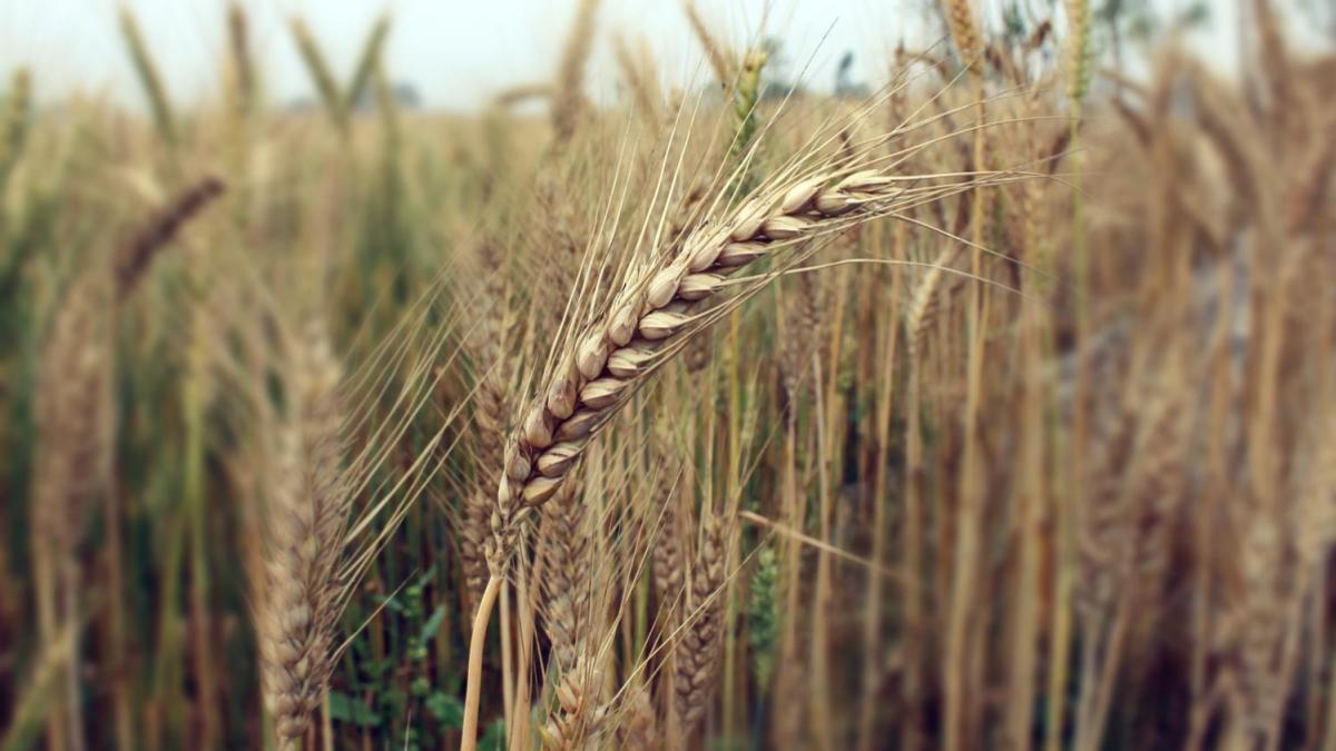 agriculture_header_3-2.jpg
