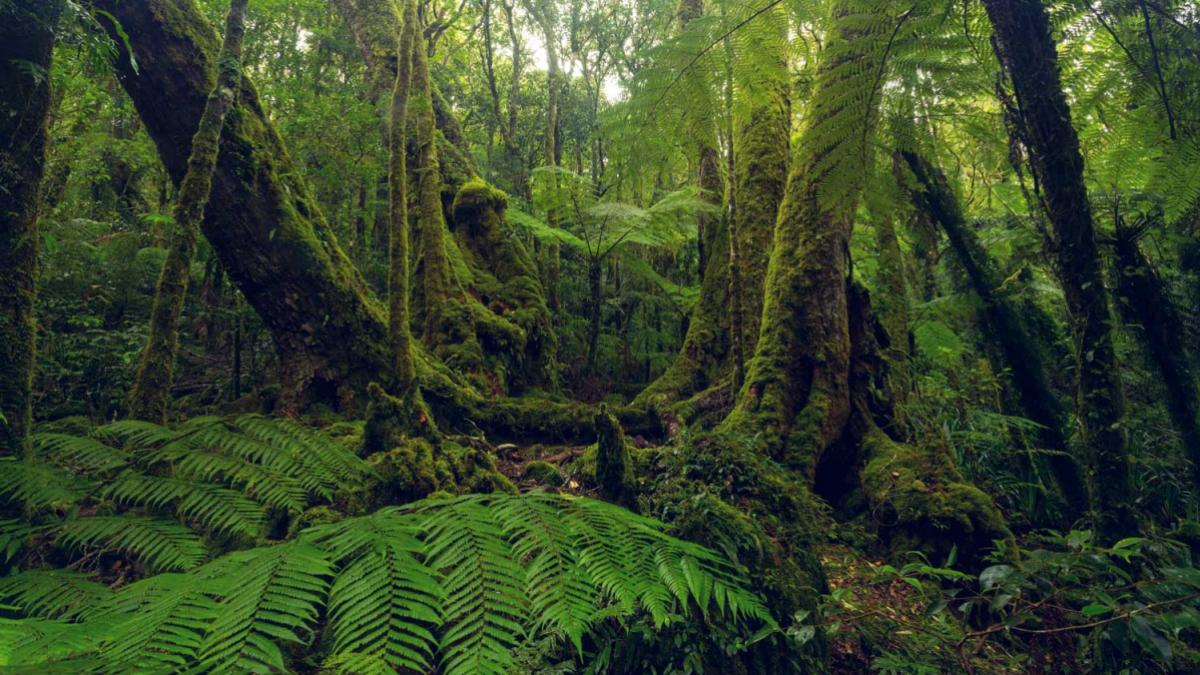 australian_rainforest_header_3-2.jpg