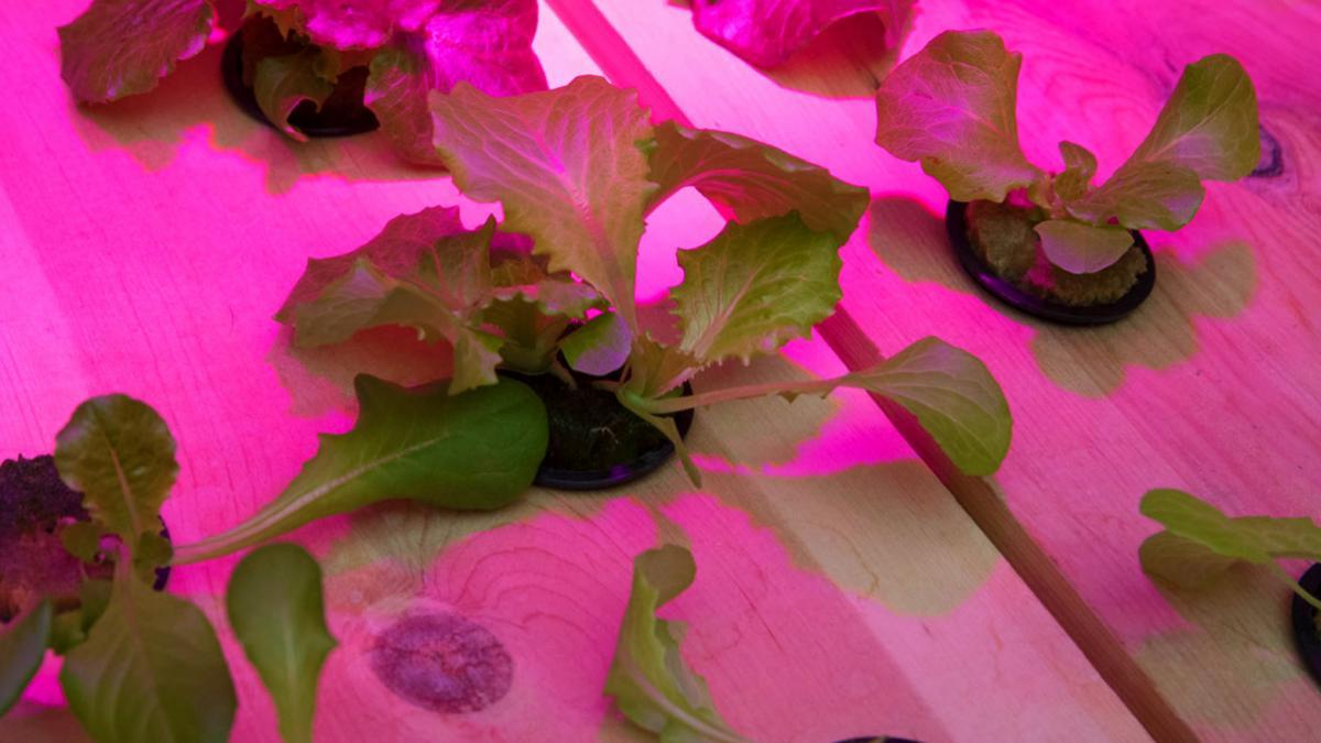 babylon_hydroponics_05_da_header_5-2.jpg