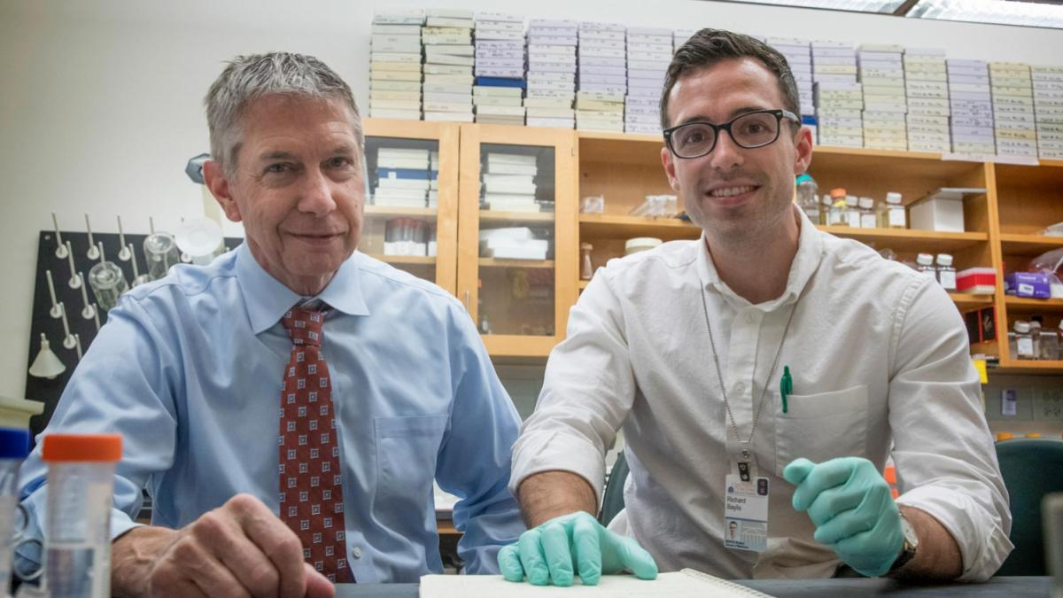 Researchers Gary Owens and Ricky Baylis and colleagues have found a positive role for inflammation in atherosclerotic lesions inside the blood vessels.