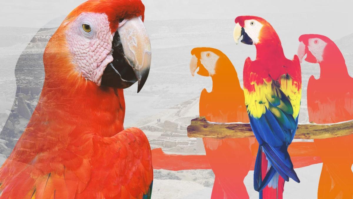 macaw_aa_header_3-2.jpg