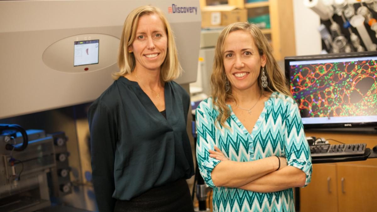 Professors Shayn Peirce-Cottler, left, and Silvia Blemker are co-principal investigators for the grant. (Photo by Tom Daly, courtesy UVA School of Engineering and Applied Science)