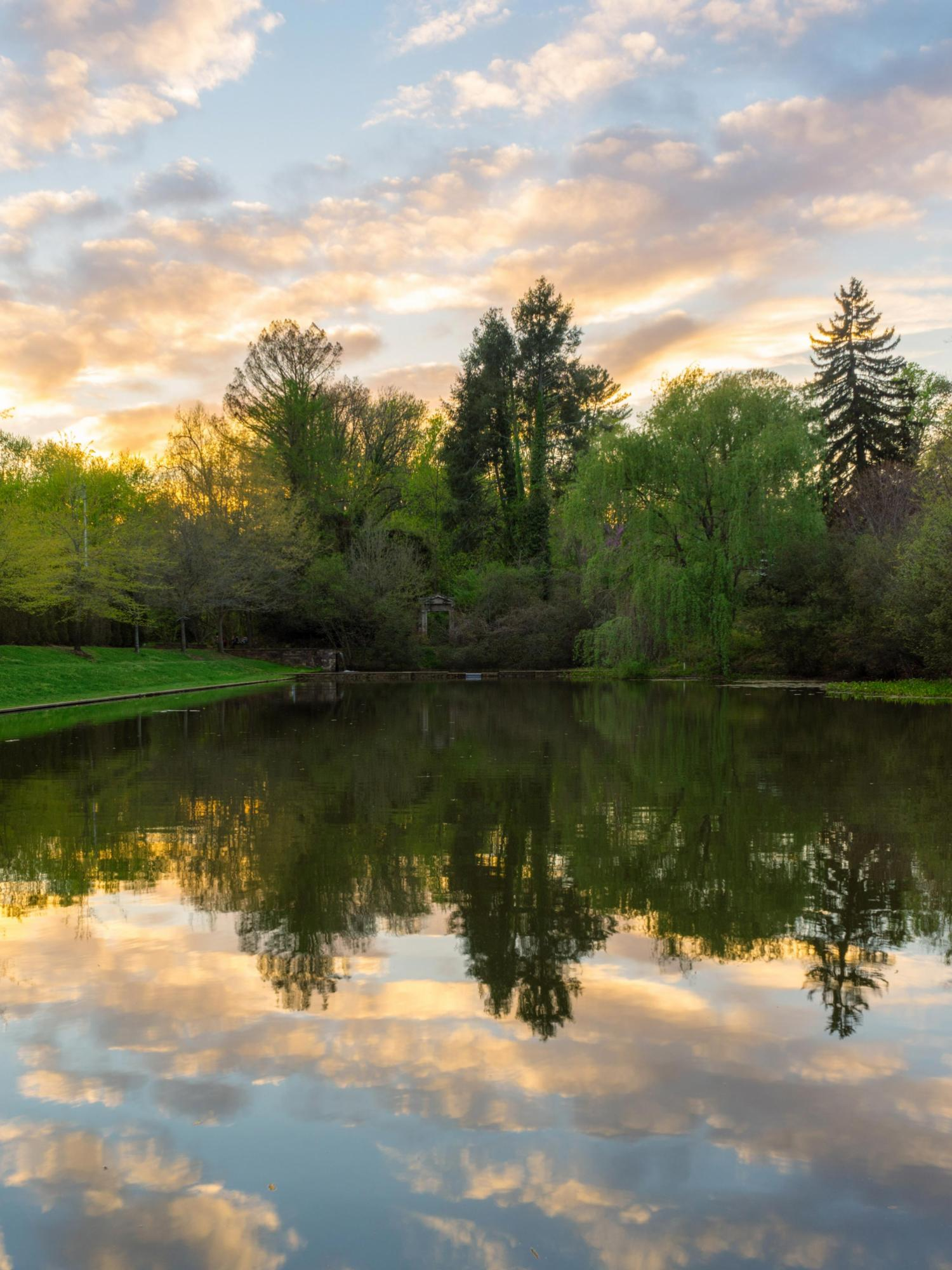 The winner of the UVA Spring Photo Contest captured the serenity of the pond at the Dell.