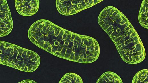 header_mitochondria_nih.jpg